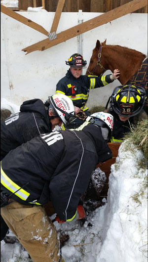 Firefighters works to free one of the horses. Photo:  Plymouth County Technical Rescue Team/ @PCTRT/Twitter