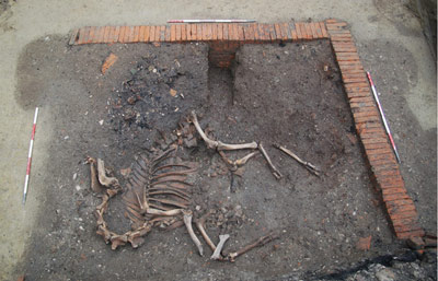 The camel skeleton lies exposed at the site in Tulin. Photo: Ute Scholz