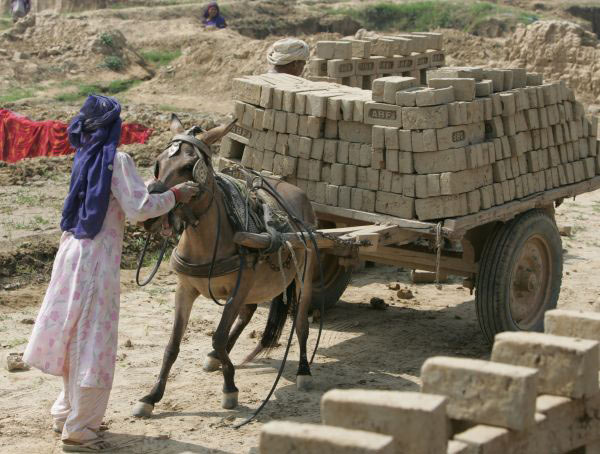 Thousands of horses, donkeys and mules work in brick kilns across Central Asia. In India alone, 50,000 brick kilns produce 140 billion bricks annually. The Brooke works in several hundred kilns to improve the lives of the animals who toil in these harsh environments alongside their poor owners.