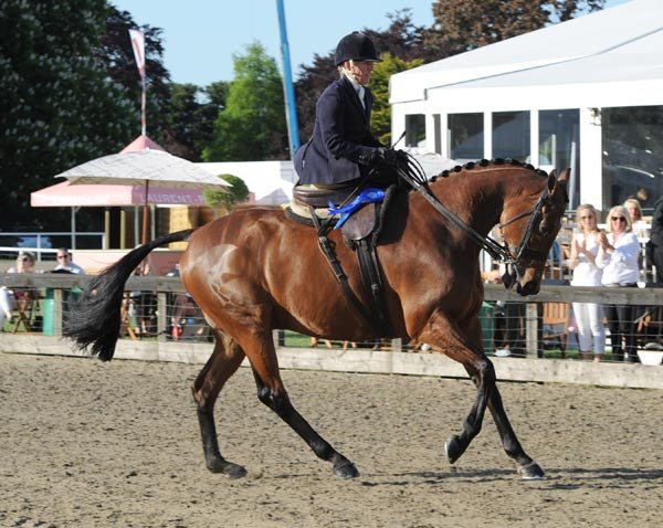 The Queen's horse, Barber Shop, pictured in Wednesday's Ladies Hunter class, won Friday's Retraining of Racehorses class.