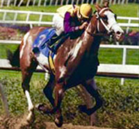 Tri Chrome, pictured in 1993.