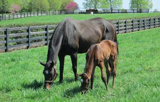 Vertigineux pictured in 2013 with Zenyatta's full brother, who is now a two-year-old but has not been named.