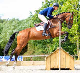 A four-year-old mare by Azteca fetched £24,000.