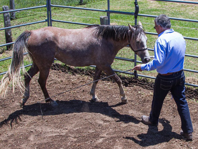 I teach every horse I work with to step forward to me to relieve pressure.