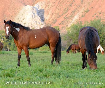 Wild horses © Wild Love Preserve / Andrea Maki
