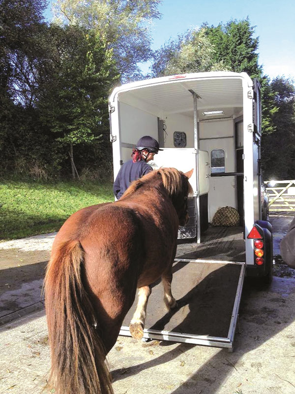 A horse is loaded on a trailer in preparation for a journey.