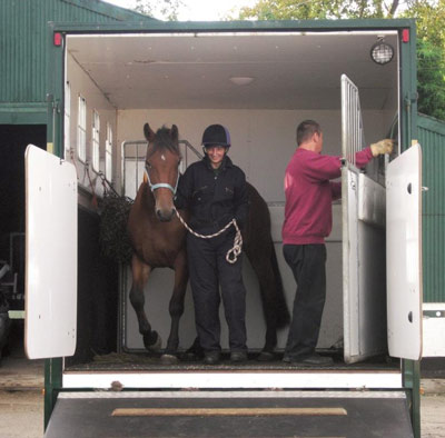 Horses' water demands can increase substantially during transport.
