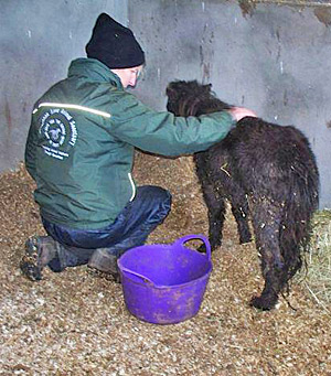 More than 60 horses, ponies and donkeys were seized from an Antrim property this week.