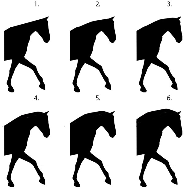 The six neck shape illustrations presented in random order to participants.