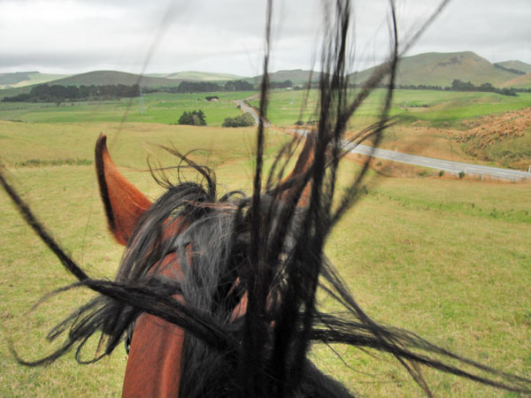 Hot and windy weather adds up to a bad hair day for recreational horses, research suggests.