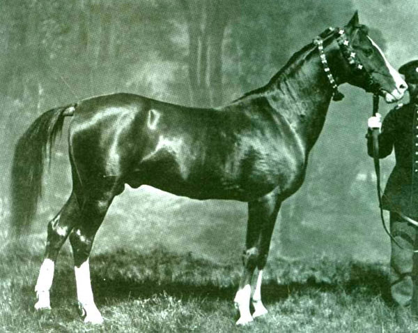 A Karabakh horse named Alyetmez, from the stud of Khurshidbanu Natavan-Utsmiyeva, accredited in the Second All-Russian exhibition. Photo from 1867. Source: www.diary.ru/~oldpostcards/?tag=863