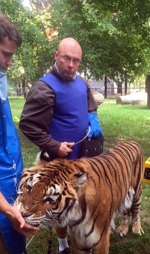 Michael Hackenberger with Bowmanville Zoo's 18-year-old tiger Robby having an x-ray, on the same day as the baboon incident.