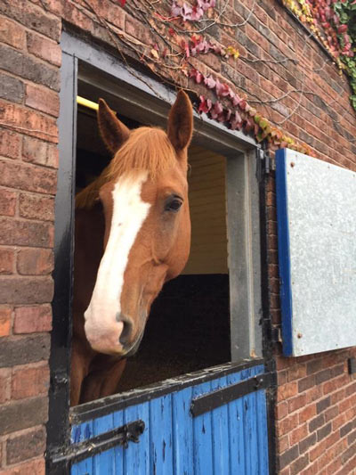 Fimber died from injuries sustained in a collision with a post. Photo: West Yorkshire Police