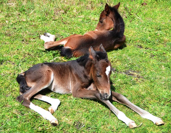 At a week old, the twins enjoy some sunshine at their Rotorua home.