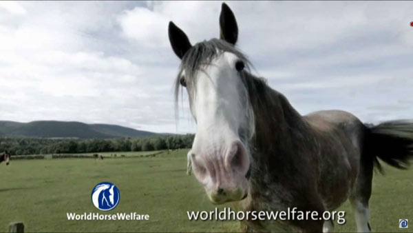 Digger in the new World Horse Welfare ad.