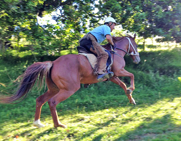 Fridtjof Hanson rides Erin in his first copy of the Bedouin bridle.