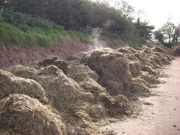 The charity has several strategies in places to deal with its spent straw and donkey manure . Photo: The Donkey Sanctuary