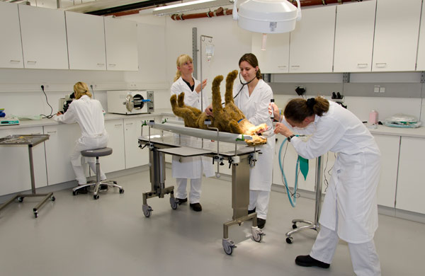 The Skills Lab is a simulated veterinary practice in which students have the chance to train on dummies.