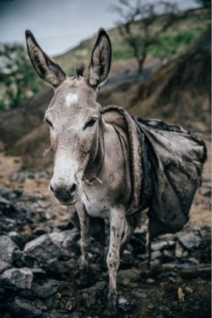 Nic Roldan's run in the London 10,000 will help equines around the world, including this working donkey in Pakistan.