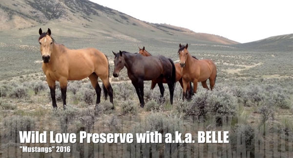 Mustangs in the wild in Idaho.