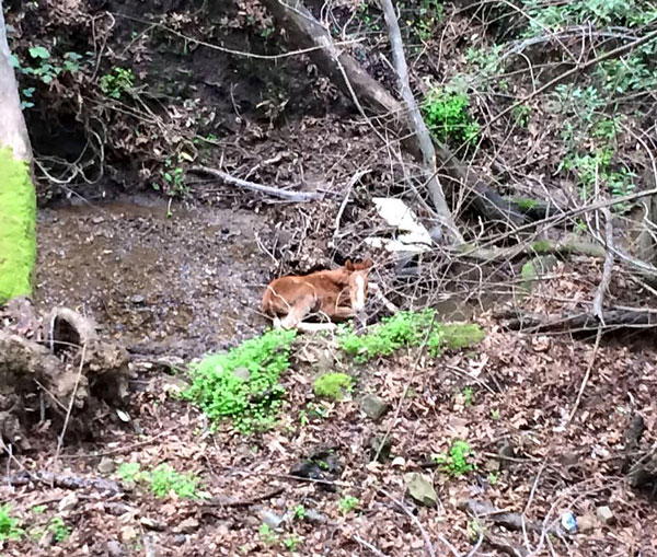 Valentine was hopelessly trapped in a steep ravine when found. Photos: Fremont Police Department/Facebook