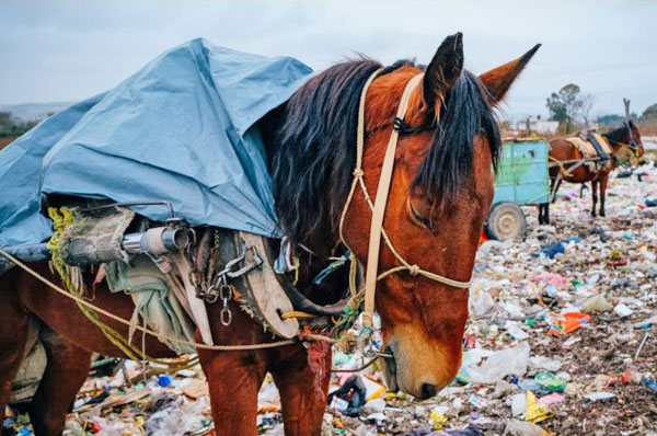 A horse working in a Mexico garbage dump.