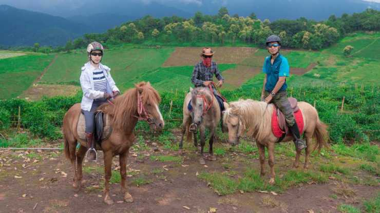 Thailand Horse Riding