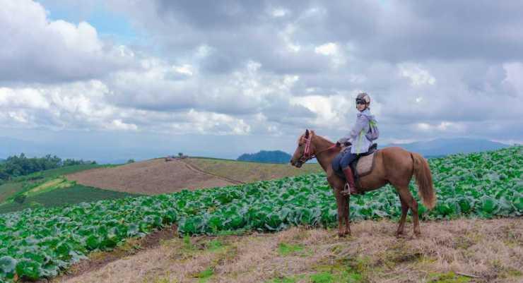 Thailand Horse Riding Solo