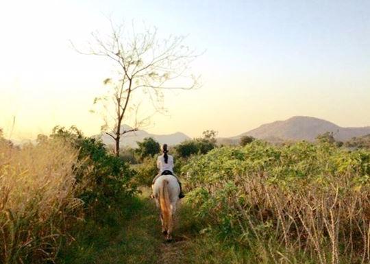 Horse Riding Thailand Khaoyai