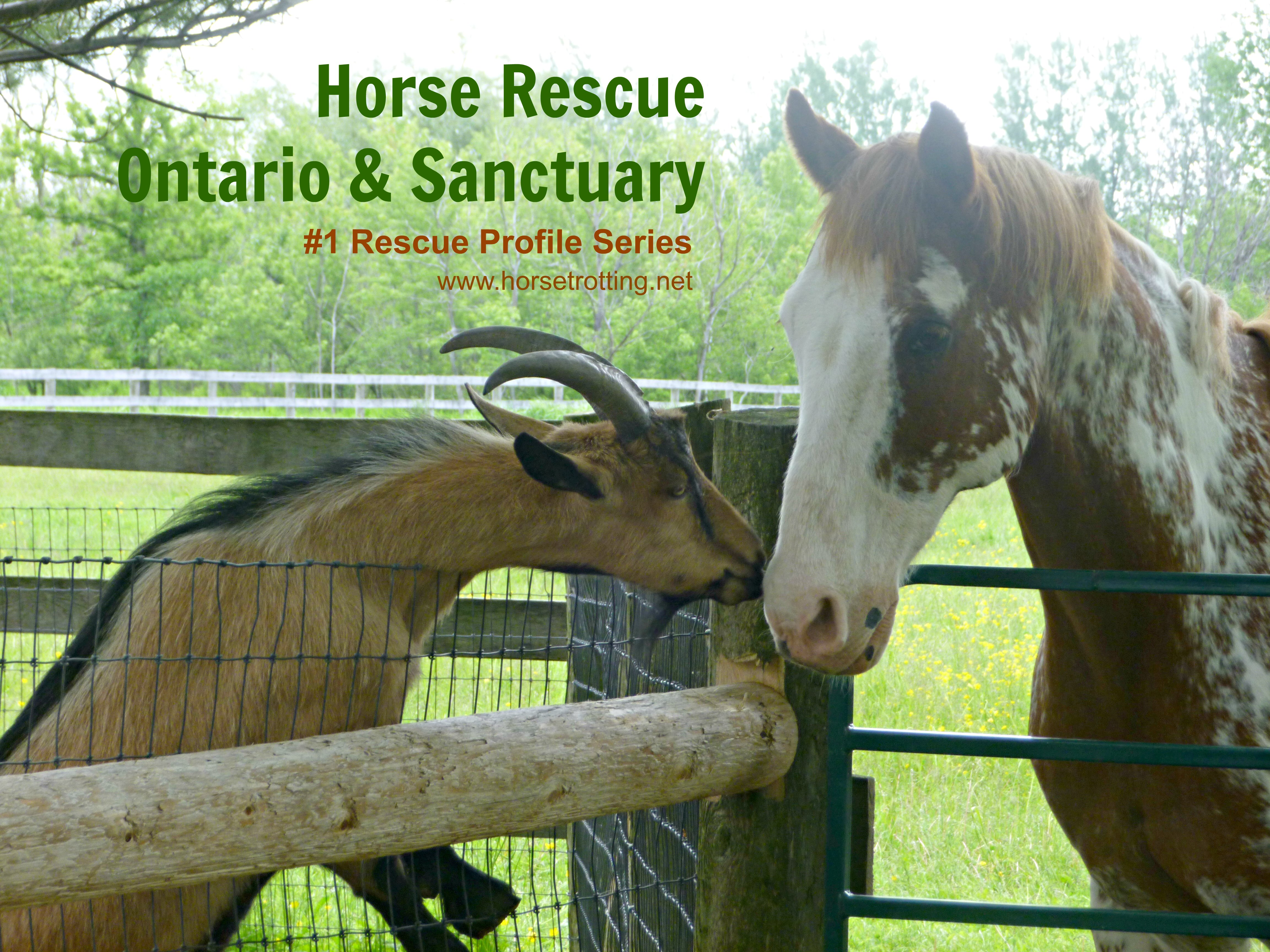 A Year of Profiling Heroes: Horse Rescue Ontario & Sanctuary (for 20 equine) #1