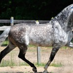 Fascinating Things You Probably Didn T Know About Appaloosa Horse Horsetv Live