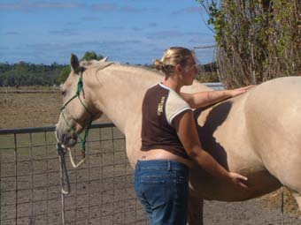 Horse Owners Program