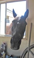 Thunder Horse having a pick a boo