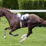 7 Fastest Horse Breeds In The World Horsey Hooves