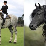 12 Most Beautiful Horse Breeds In The World Horsey Hooves
