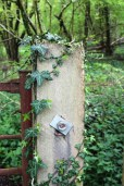 Gate Post and Ivy