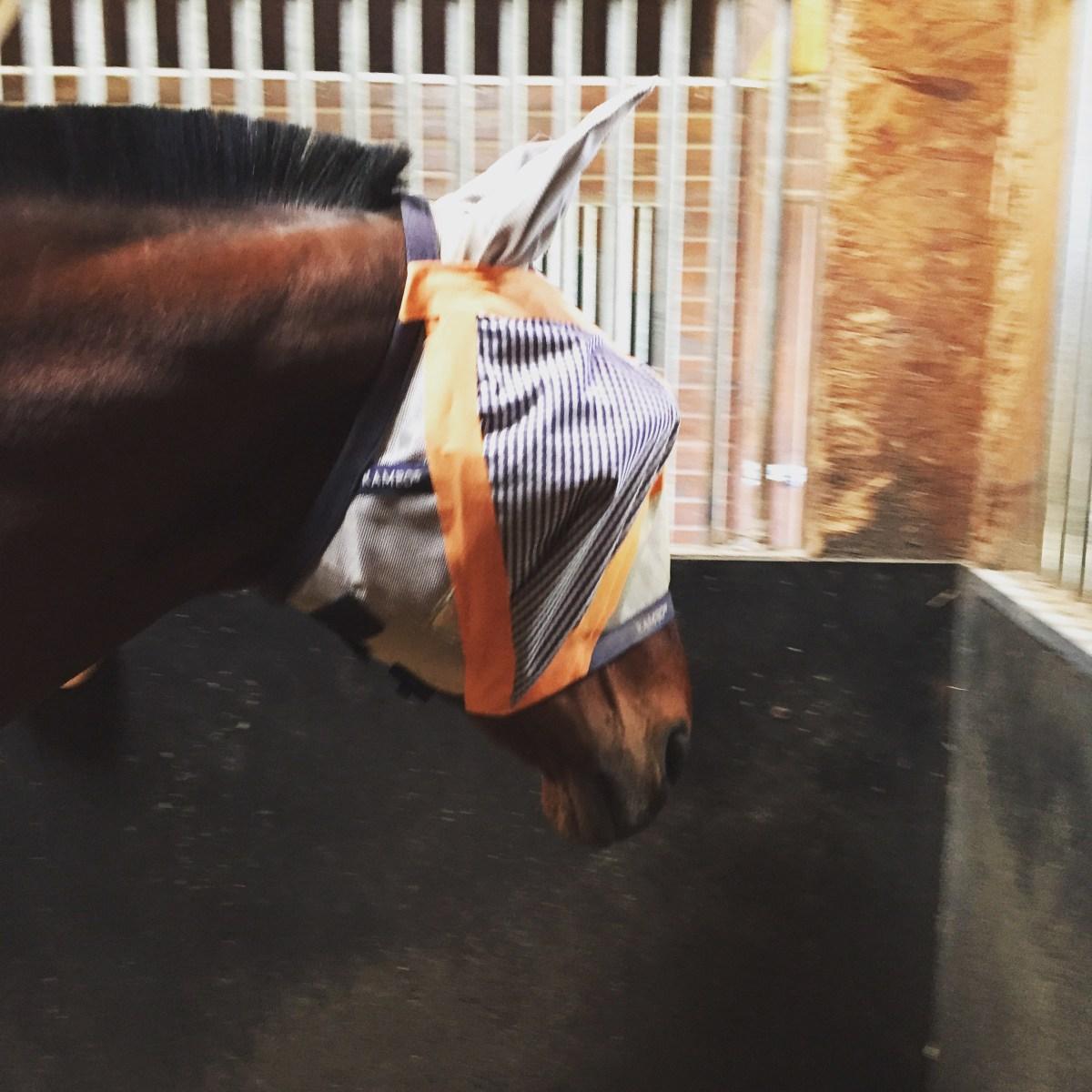 L'ulcère cornéen chez le cheval