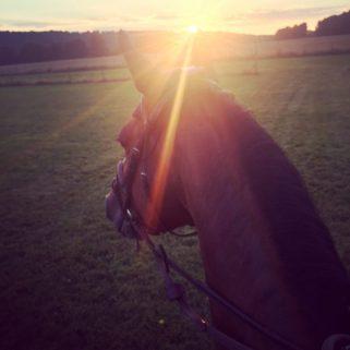 horsecom sunrise