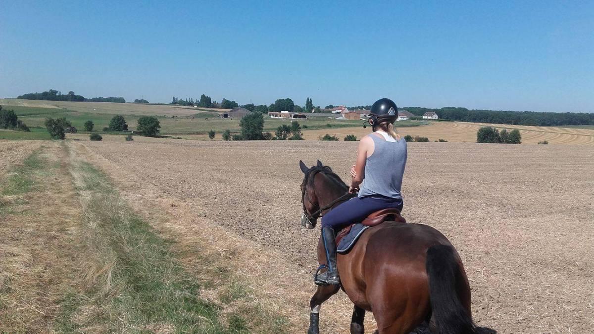 Le Horsecom pour mettre un cheval en confiance.