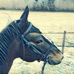 Le Horsecom bénéfique pour la récupération de mon cheval ?