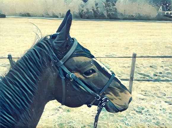 horsecom récupération