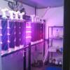 Algae-culture-closet-with-LEDs-on2