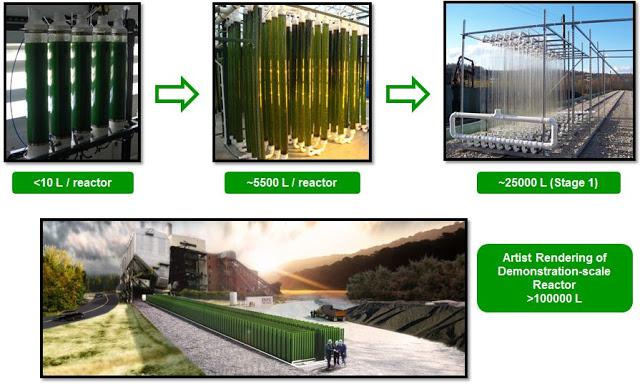 Algae Production in Photo Reactors