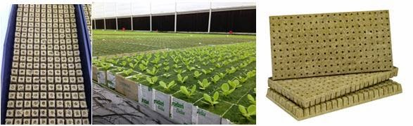 grodan-lettuce-and-herbs