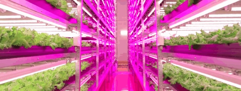 Horticultural LED Grow Lights » Hort Americas