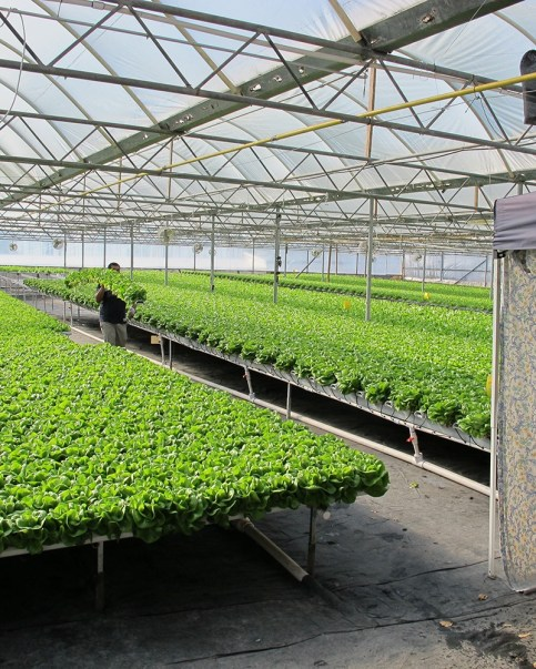 Can hydroponics be organic hort americas for American soil