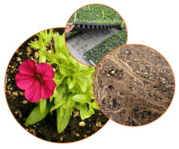 University of Florida Nutrient Management Course