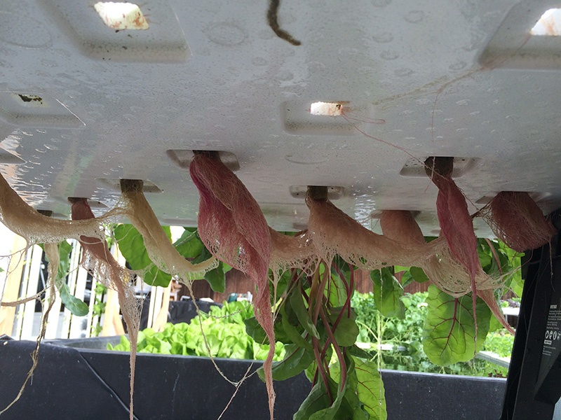 closed-bottom-organic-plug-hydroponic-substrates-growing-system