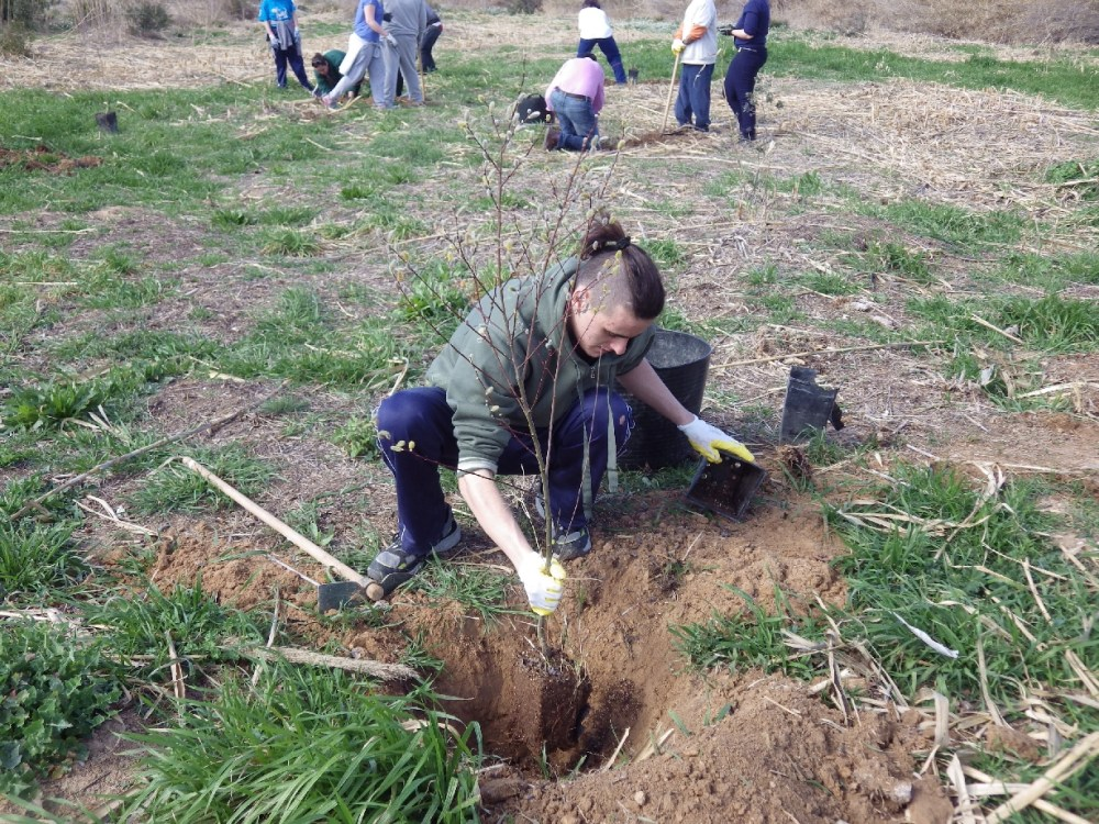 Crònica: Plantàrem més de 100 arbres junt al riu Túria... (4/6)