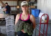 Harvesting Broccoli on the Small Farm Unit